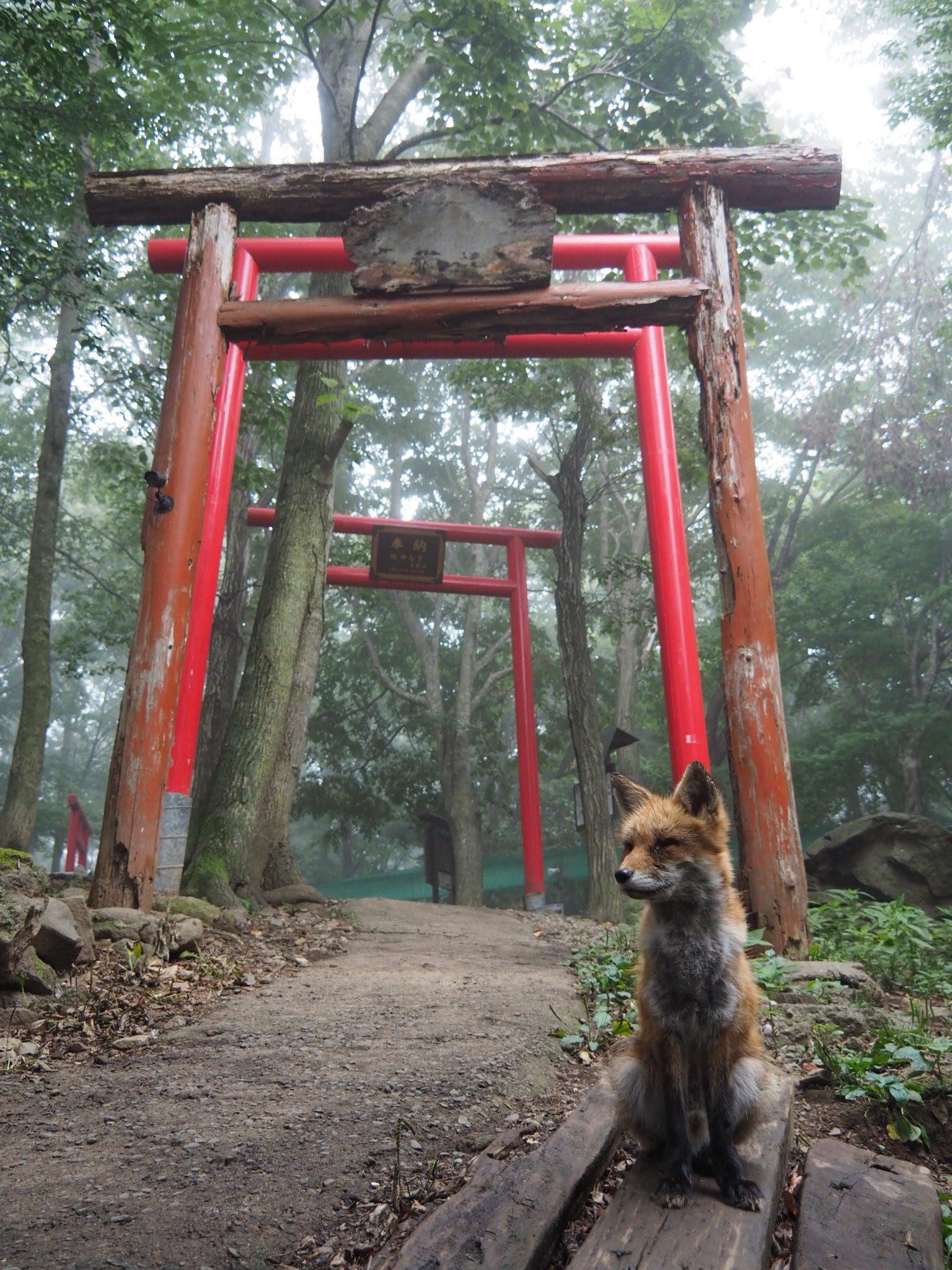 奇跡的な狐・稲荷神社・霧のコラボ!!これはきっと神の使いに違いない!!!!