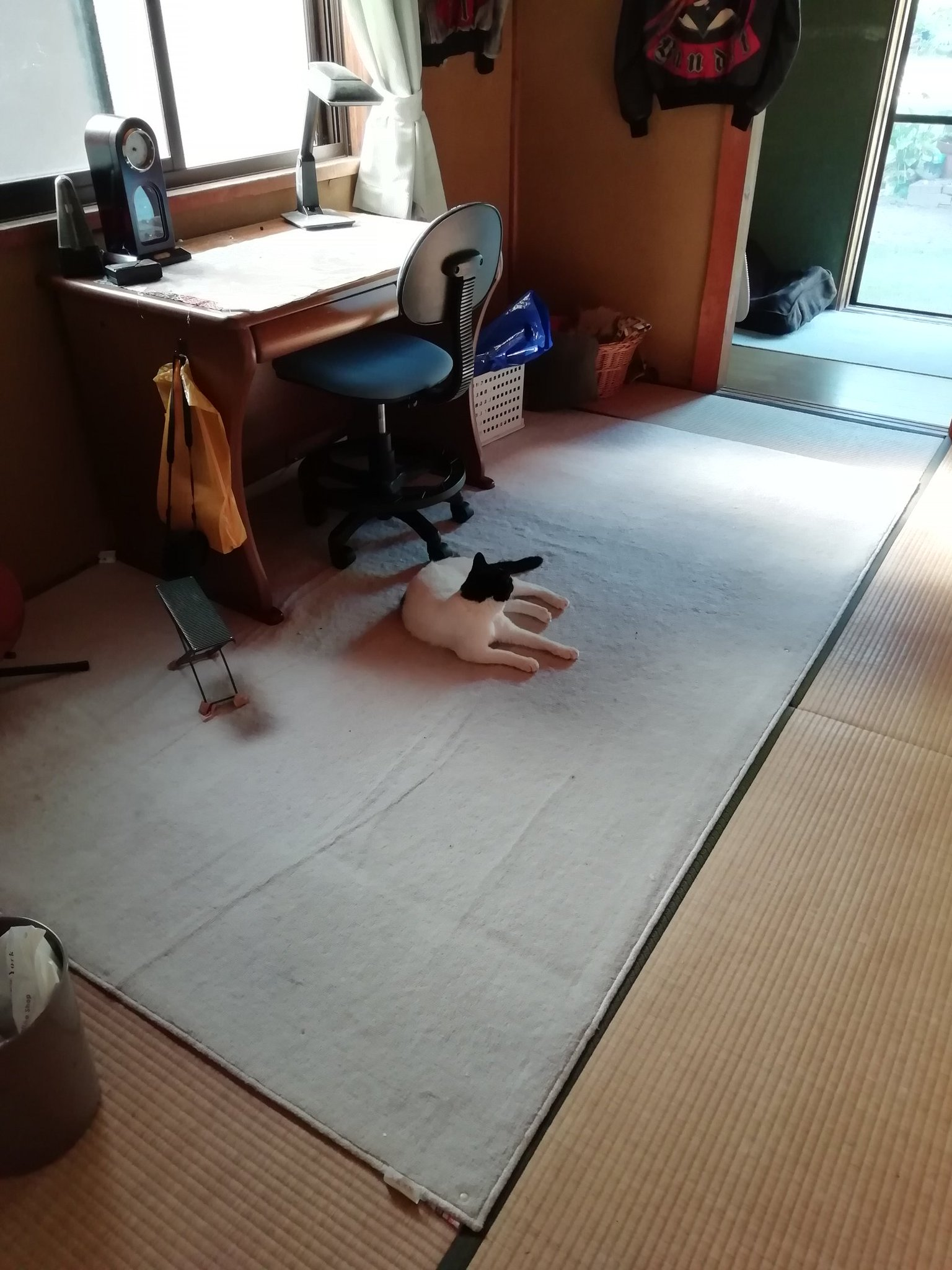帰省した息子に、まとわりついて 息子大好きな猫は至福の一週間を過ごして、息子が帰ったあと 息子の部屋で一人…息子を待つ猫… そしてまた、一人で庭を眺めている…