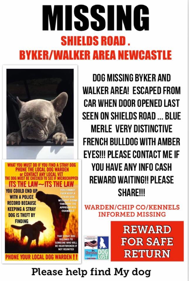 #MISSING #Byker Shields Road, FRI 9/8 LAST SPOTTED wandering towards #BykerIceland & caught by couple with #GSD put on leash & walked towards #JacksonsPub not as yet handed in ALL AUTHORITIES ARE AWARE so I would imagine #CCYV will be checked NE6 #NewcastleUponTyne #Frenchiepic.twitter.com/iQvJ02GyyK