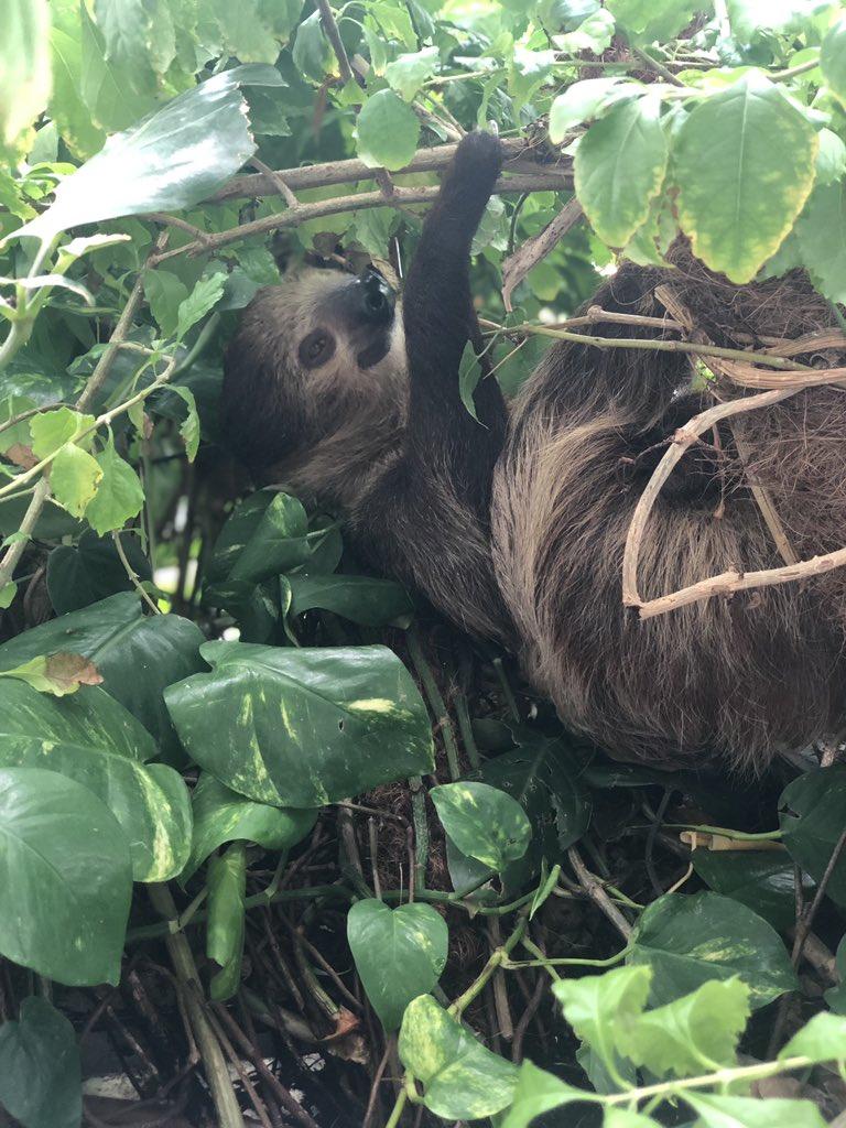 микроклимат животноводческих помещений в условиях забайкалья