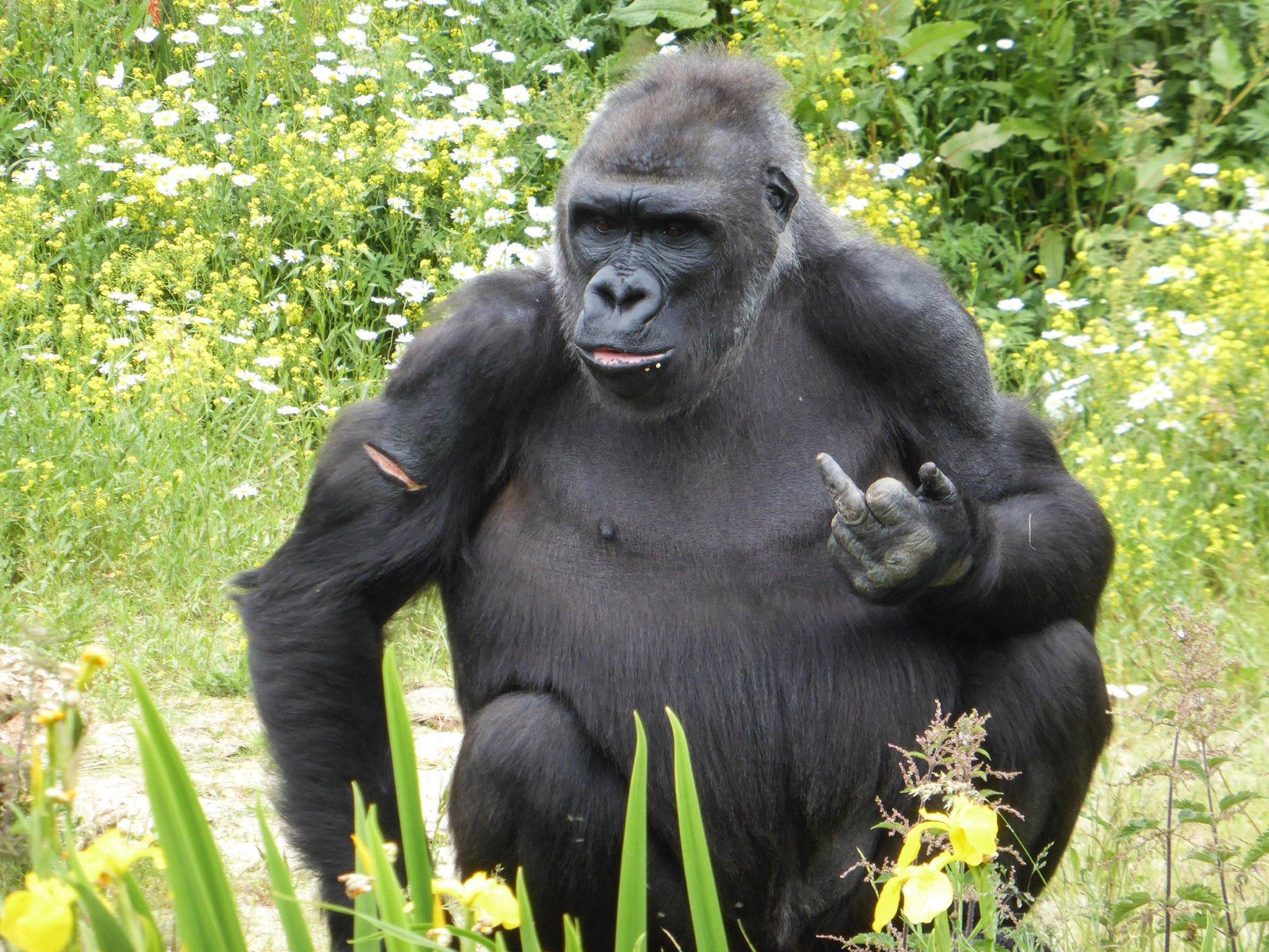 Смешных школьников, гориллы картинки смешные