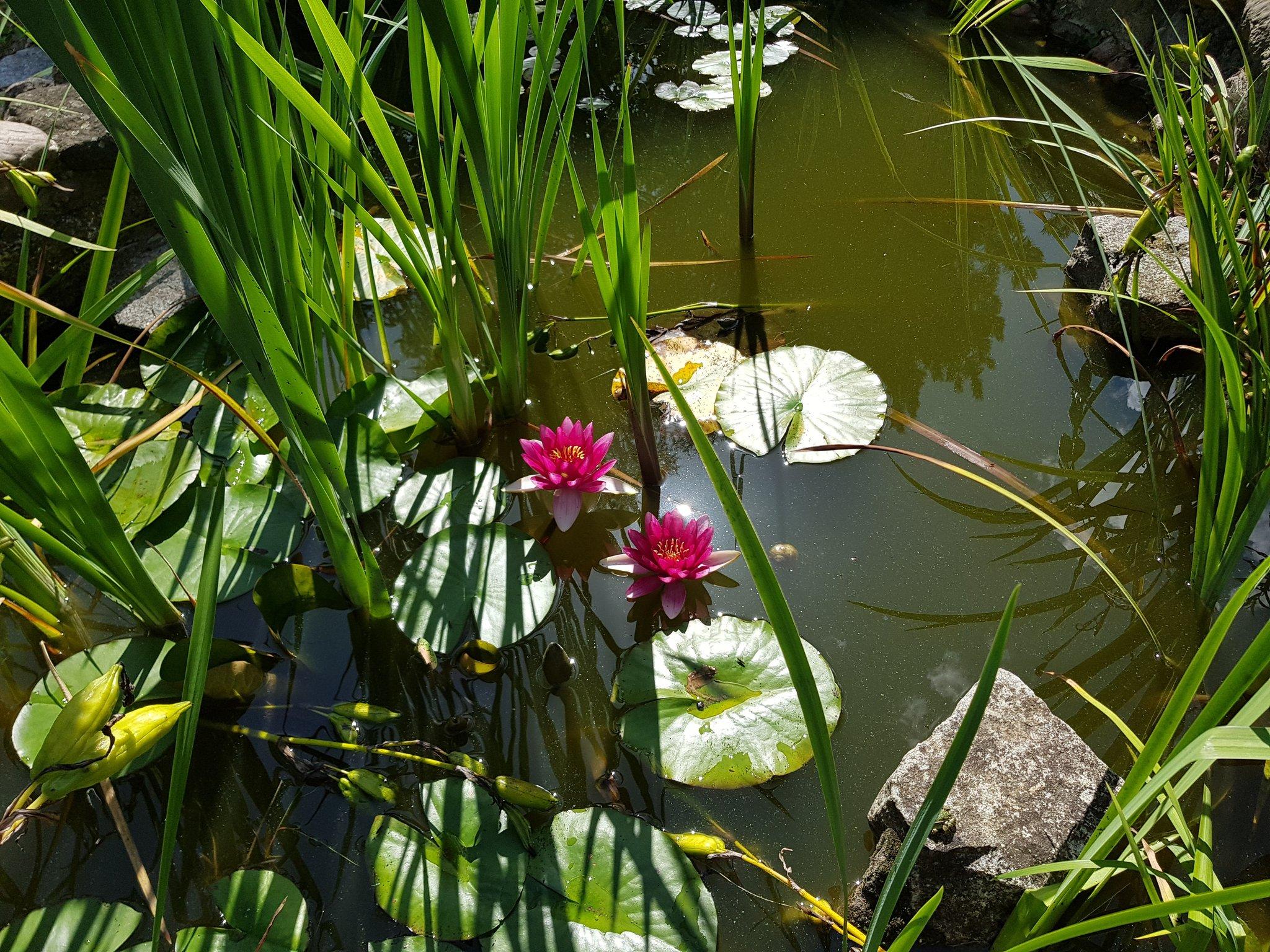 цветение водоема фото зимой они