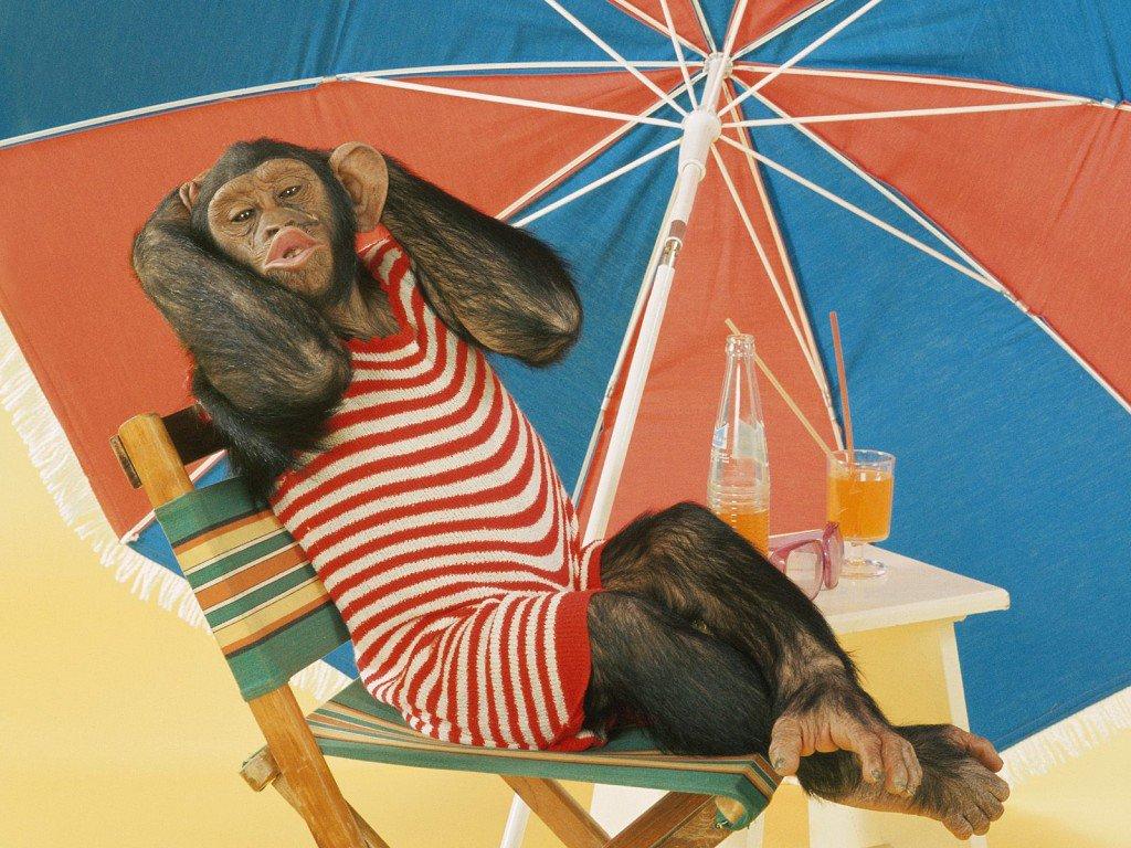 Черных, веселые картинки про отпуск с надписями