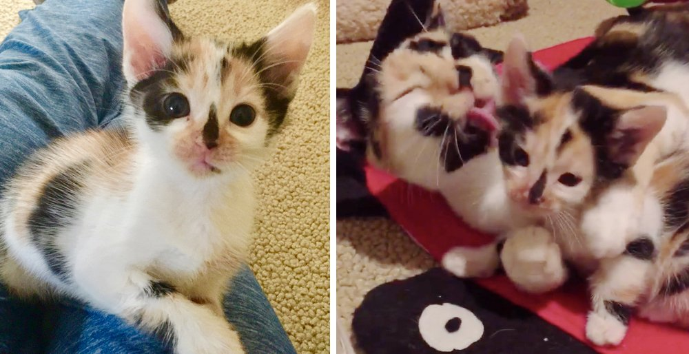 Cat rescued from the streets, bonded with her little mini me - they are completely inseparable. See full story and updates: lovemeow.com/cat-rescued-st…