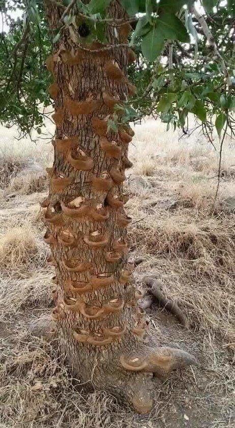 شجرة الماء