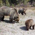 Imagen para el comienzo del Tweet: ¿Eres #BearAware? Estas preciosas