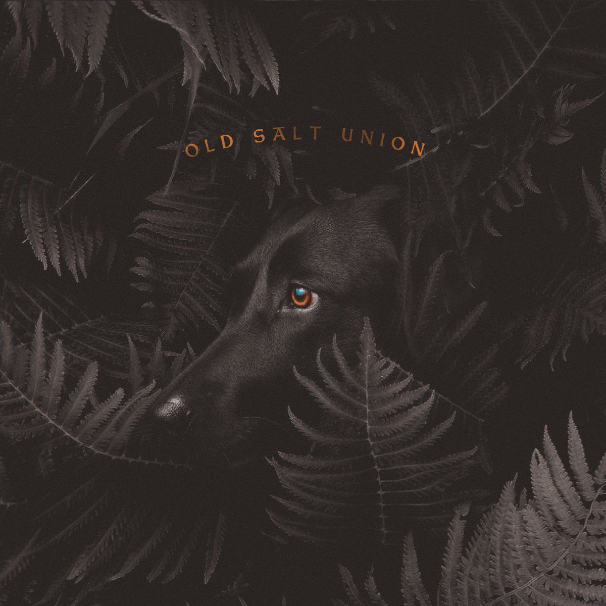 This Friday! @OldSaltUnion comes back to Vintage Vinyl for a special in-store performance at 7:00! Pick up their newest release, Where the Dogs Dont Bite and for those 21+ enjoy some free beer courtesy of @Schlafly! Dont miss it!