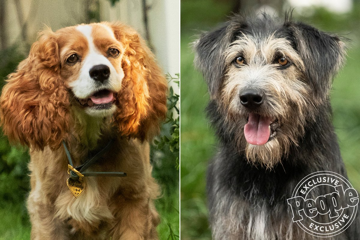 """Shelter Dog Becomes Disney Star in Upcoming """"Lady and the Tramp"""" — What a Beautiful Story!"""