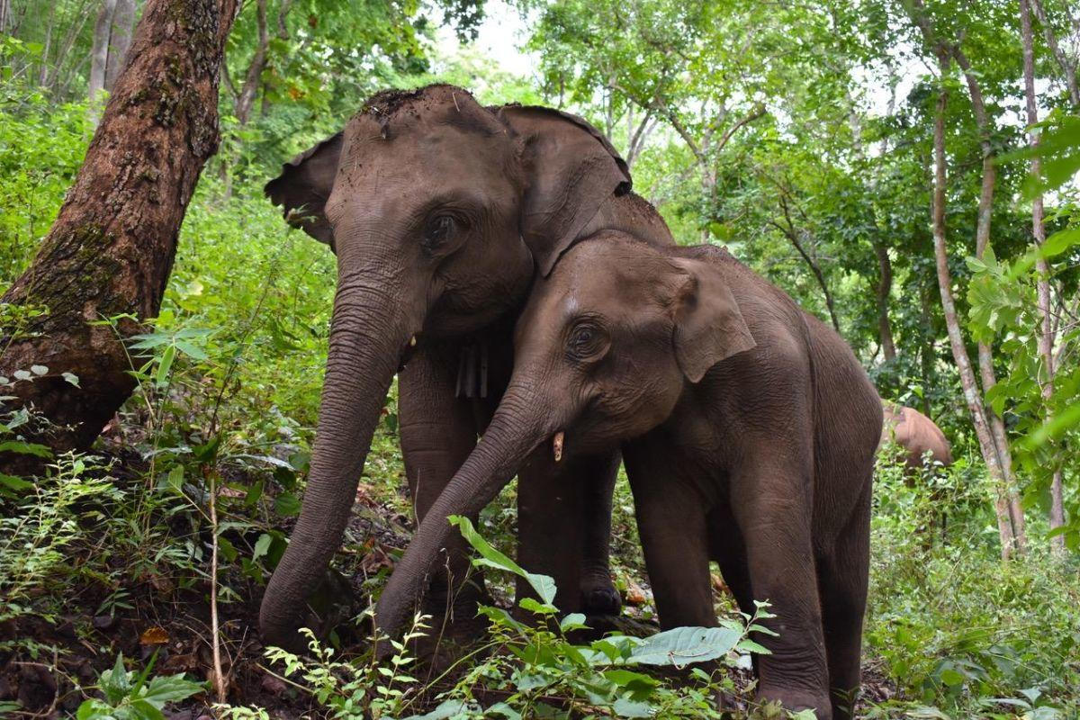 test Twitter Media - From life in captivity to roaming free in the forests of Thailand, @MahoutsElephant helps give working elephants a new lease on life. This #WorldElephantDay, Mahouts COO Rebecca Winkler '16 introduces us to a few of the incredible creatures in their care: https://t.co/YuXvPby65J https://t.co/gX8V88aTGB