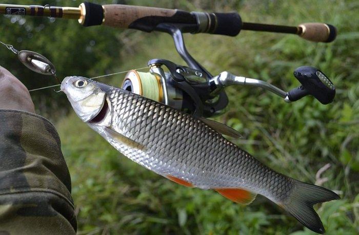 правила рыбалки красноярский край
