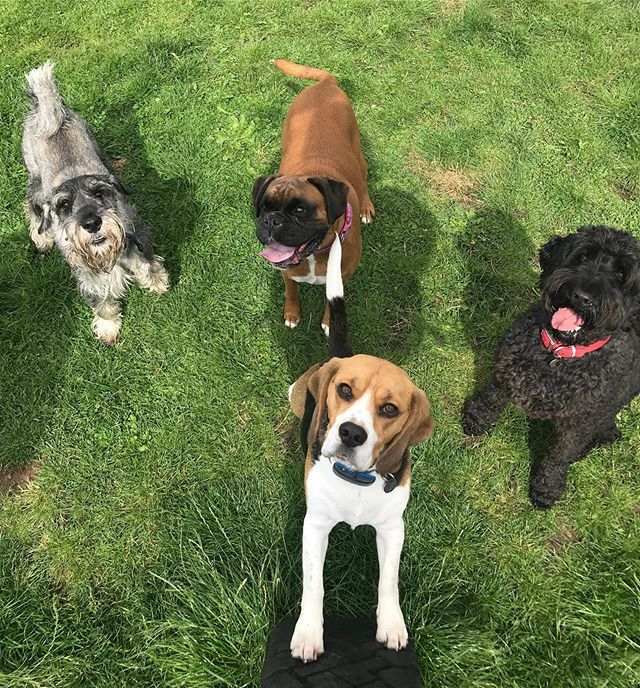 Oscar, Hudson, Penny and Sam in today's Yappy Hour