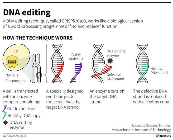 Editing the human genome: do the risks outweigh the rewards? https://wef.ch/2H3Rez5 #science #technology