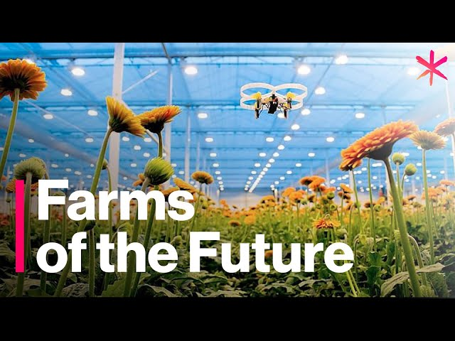The futuristic farms that will feed the world - https://www.vubblepop.com/letstalkscience/video?vid=the-futuristic-farms-that-will-feed-the-world&dest=ltscience1 … - @letstalkscience via @freethinkmedia 👩‍🌾🚜🌱🌾#farming #agriculture #tech #technology #futureoffarming #Food #foodsecurity #FoodieFriday