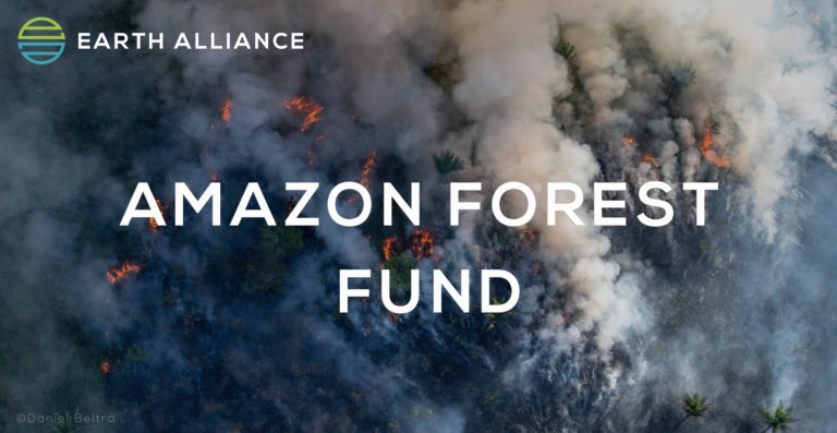 Anyone else worried like hell for the Amazon!? Now you can help by donating to a reputable organization—@earthalliance, an organization ran by @LeoDiCaprio, @LaurenePowell, & Brian Sheth. Retweet and Donate!#PrayforAmazonia #AmazonRainforest ealliance.org/amazonfund/