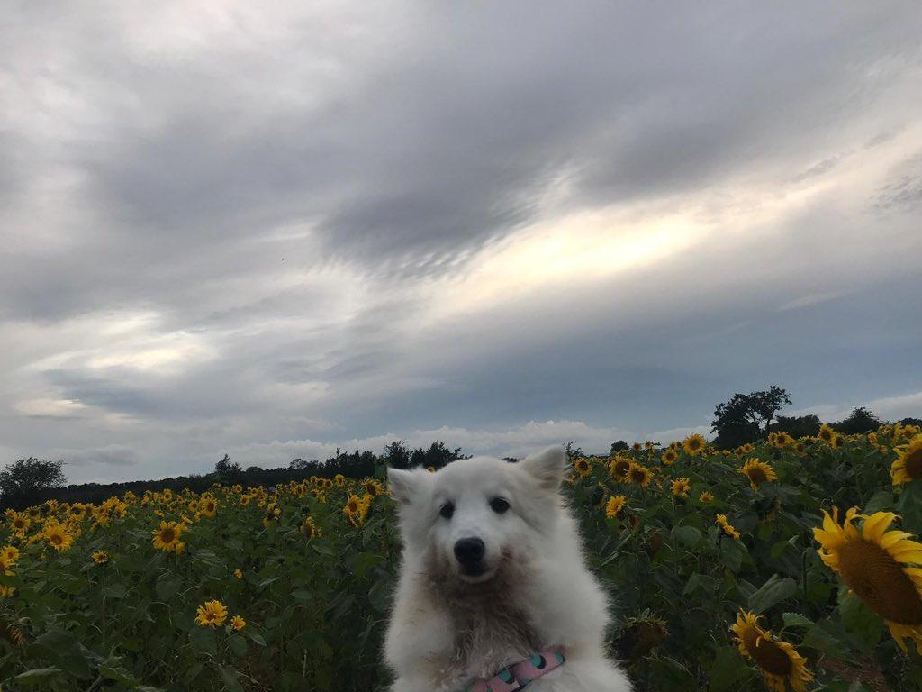 Teddy & sunflowerspic.twitter.com/xxoLkEYwJK