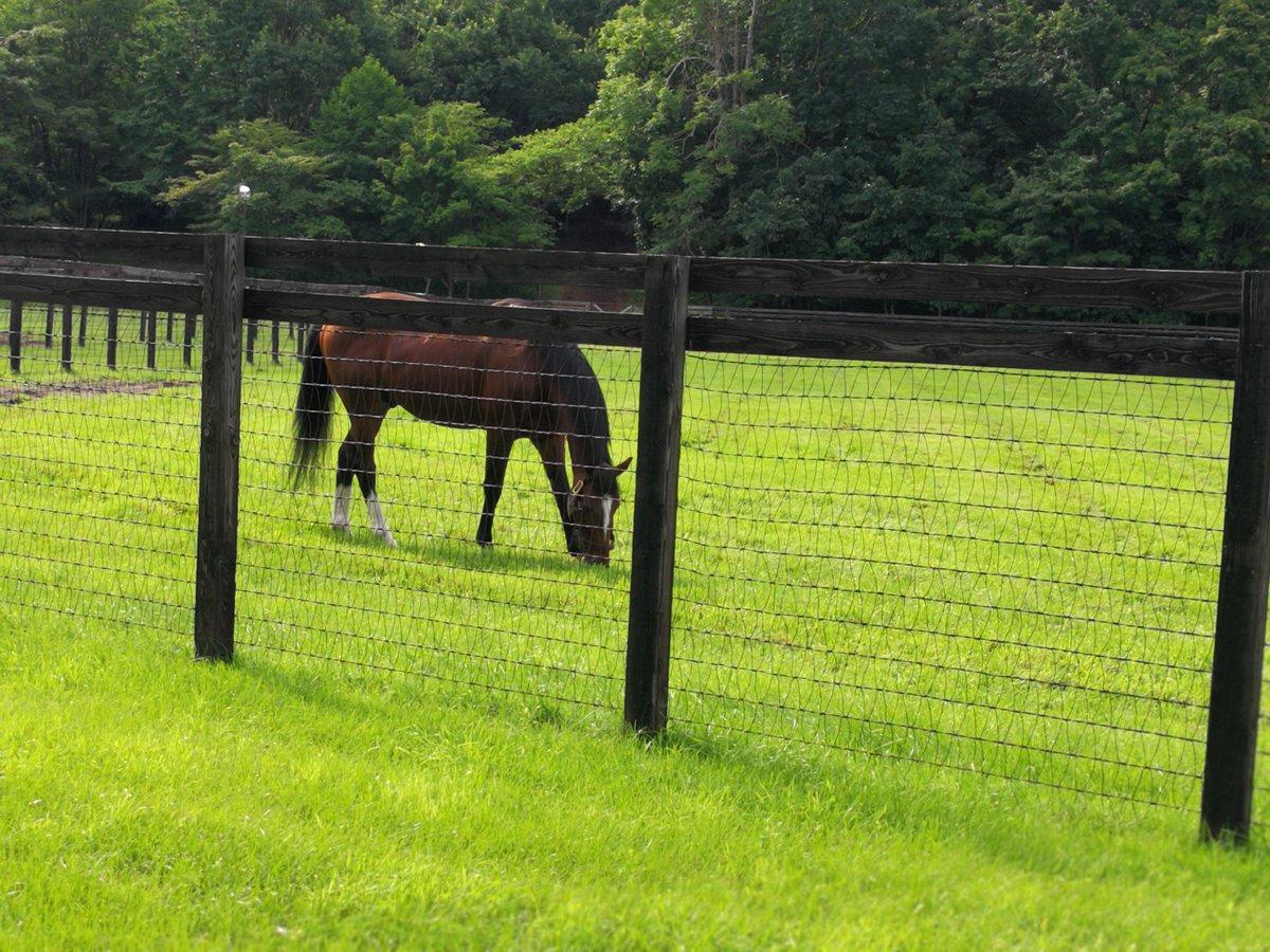 ハービンジャー先輩は、真ん中の草に飽きたので柵沿いを食べています。毛並ツヤツヤです。