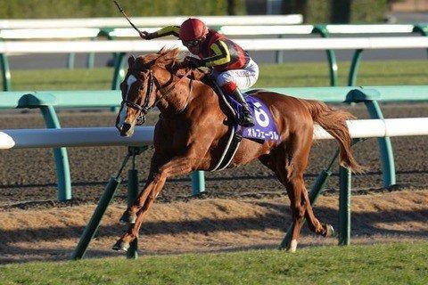 【競馬】池江「凱旋門はオルフェーヴル級の馬でなくても勝てると思いますよ。」 https://t.co/vspwtc3In4