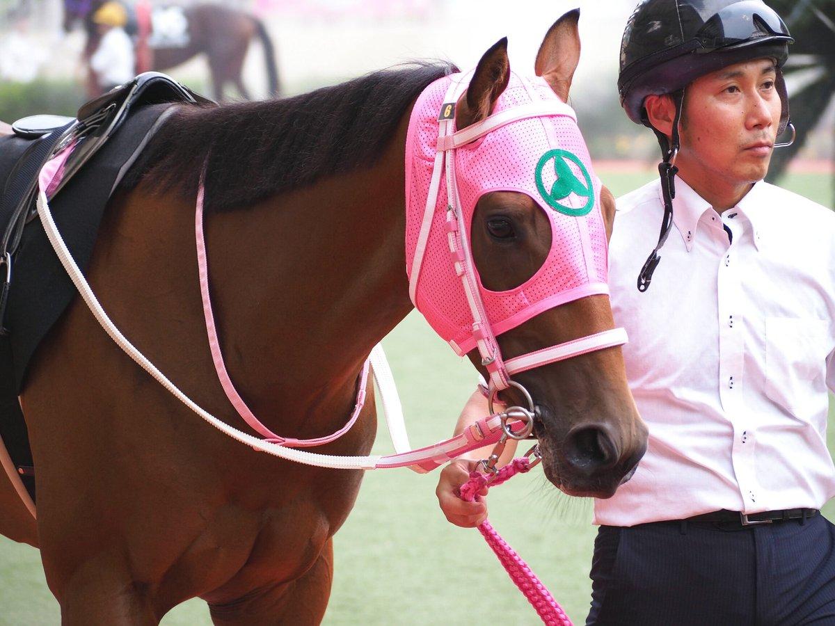 2019.8.24 小倉競馬第9レース・ひまわり賞のパドック。グラスワンダー産駒のテイエムヤマカゼ(山内厩舎/2歳せん馬)。鹿児島・テイエム牧場の生産馬です。ピンクのメンコが似合ってかわいいね。