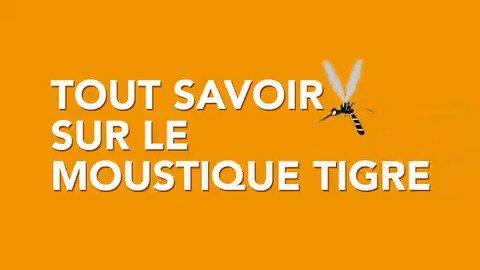 #Moustiquetigre |Ce moustique peut transmettre des virus responsables de la dengue, du chikungunya ou du Zika 👉 #JagisPourMaSanté : retrouvez tous nos conseils pour vous protéger : https://t.co/LFmn4CoxLI 📍 Participez à leur surveillance avec l'@Anses_fr https://t.co/uhL4Bac8vb https://t.co/4KW5xWOwA6