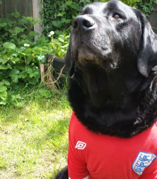 Seeing as it's #InternationalDogDay we want to see your dog wearing your sports teams colours. Here's @GOladapoDay's dog Milo to start you off. ❤