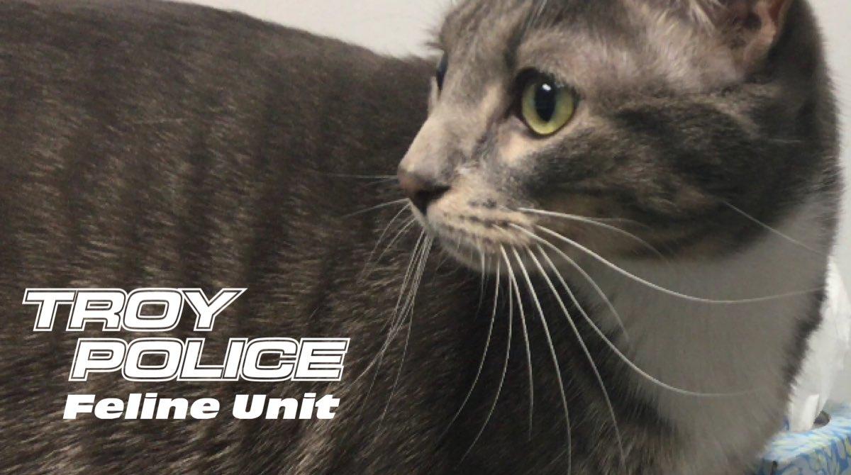 Troy Police Dept  (@TroyMI_Police)   Twitter