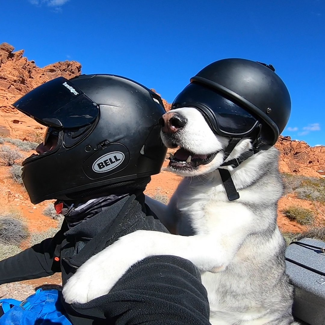 This dog clearly LOVES riding a motorcycle with his dad!