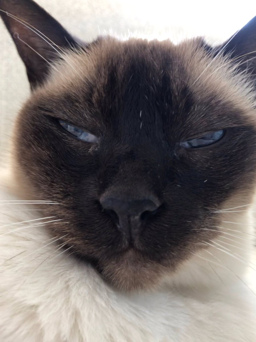 RT @myleftfang: TODAY'S SUPERMODEL POSE: PENSIVE. MAYBE FOR AN AD CAMPAIGN FOR CHANEL NO.5 OR KITTY LITTER? https://t.co/9rji9Ex3ib