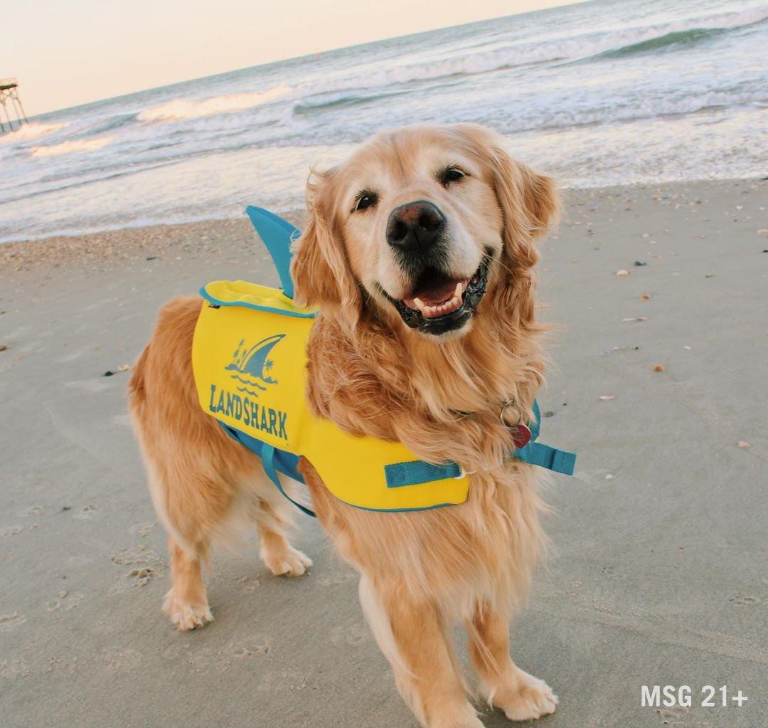 Landshark Pet Life Jacket