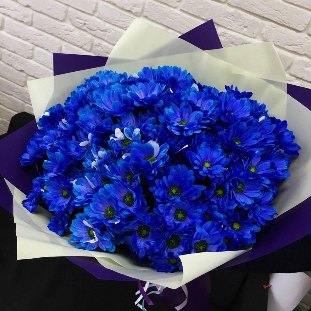 большой букет синие хризантемы фото странице представлен