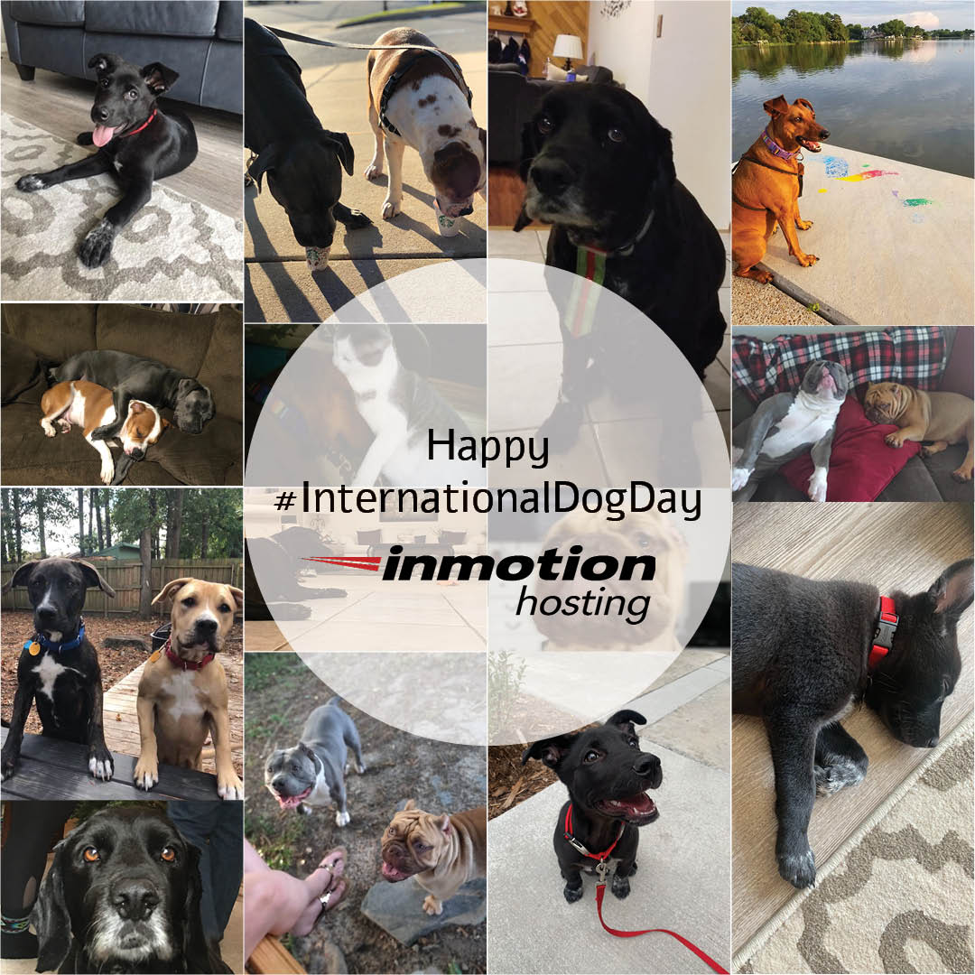 Image result for inmotion hosting down