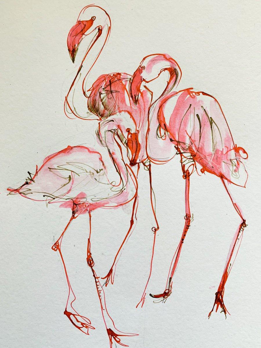 flamingo hashtag a Twitteren
