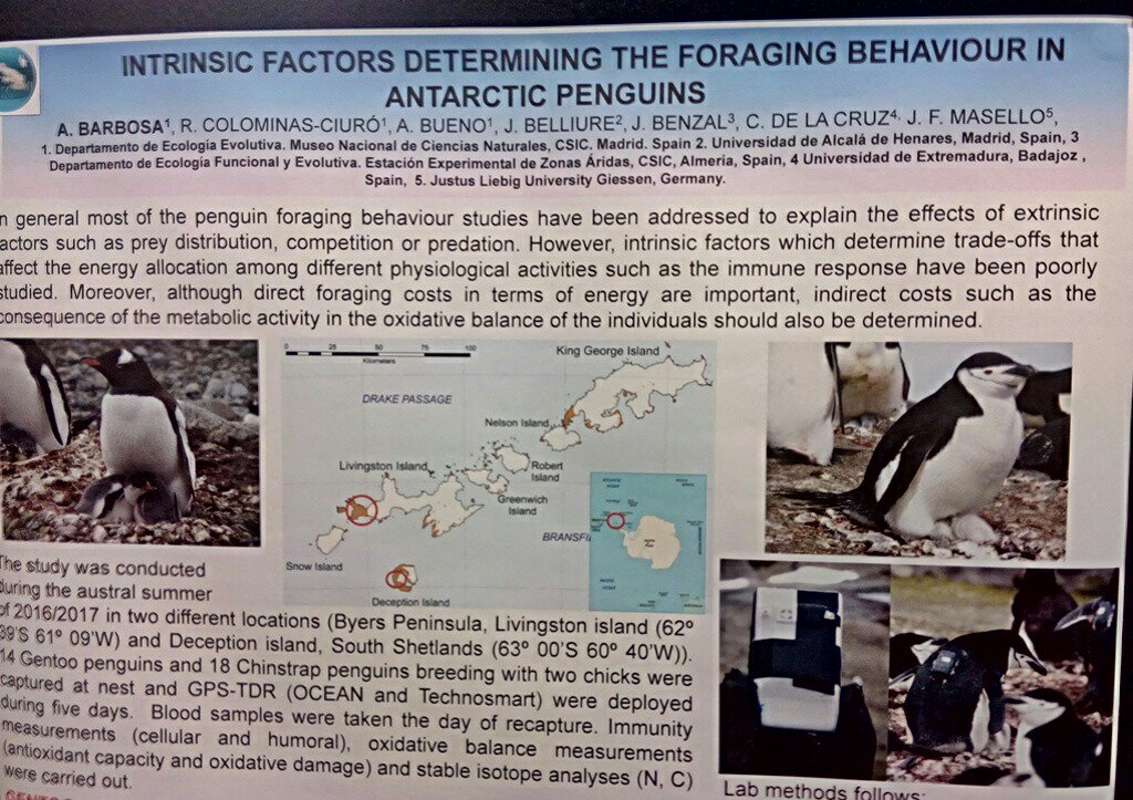 Our contribution to International Penguin Conference #IPC10 about the interactions between foraging effort and physiology (immune function) and the consequences for oxidative stress. If you want to know more visit the poster number 6 or contact me <br>http://pic.twitter.com/q80Rrt7wIU