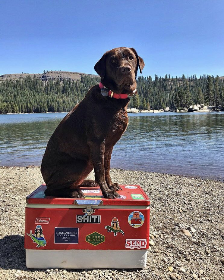 Shiti Coolers On Twitter Happy National Dog Day Ig Mrscaylawilliams 4.6 stars from 1 shoppers. shiti coolers on twitter happy