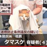 容疑者タマスケ氏の自宅らマタタビを押収か。