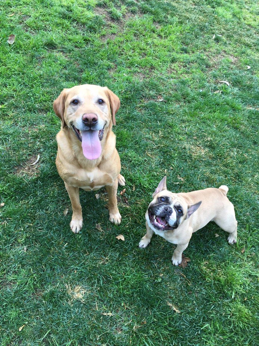 RT @NancyWilson: Happy national dog day! I love these good boys https://t.co/M3XkswyTdj