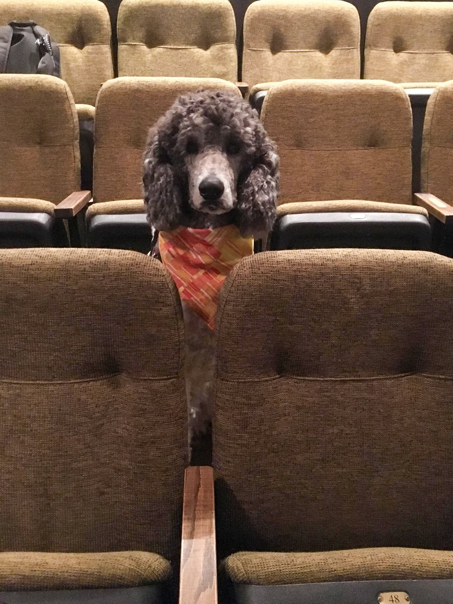 Pups at the Theater! These Service Dogs in Training Sat Through a Live Show and Were Such Good Doggos