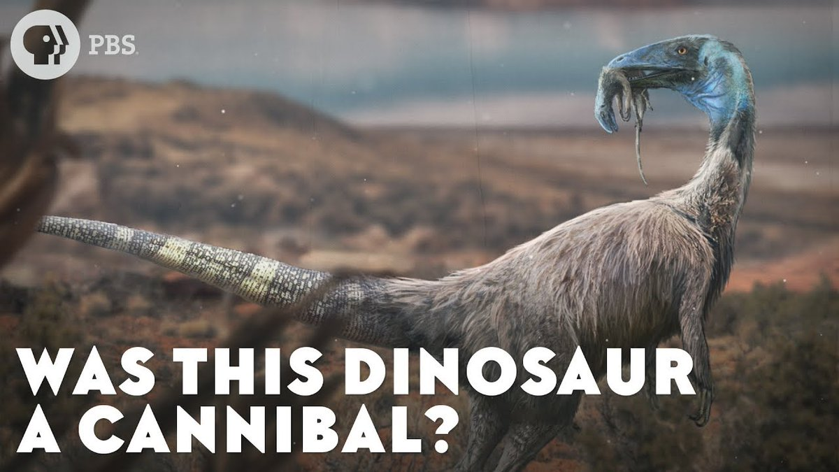 The debate about whether Coelophysis ate its own kind involves evidence that includes some very strange fossils. youtu.be/kjBbcT533r4