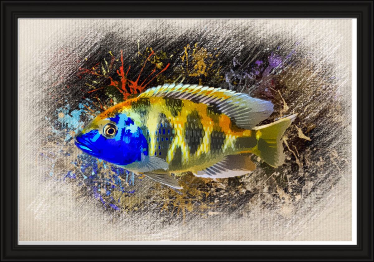 New Giraffe Hap African Cichlid Sketch Portrait By Scott Wallace is available now at  http:// Digital-Designs.pixels.com     #ThursdayMotivation <br>http://pic.twitter.com/4hYnUiGzHR