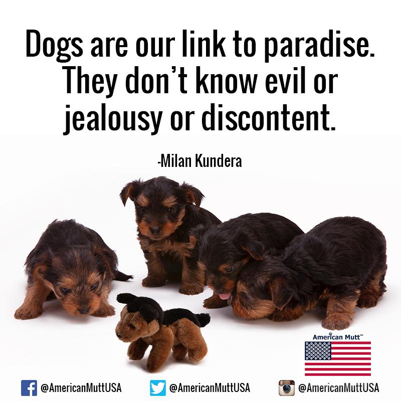 True #dogsoftwitter #dogsofinstagram #doggust