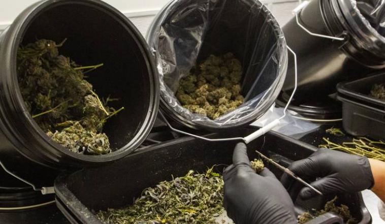 Plaintiffs present closing arguments in Nevada cannabis hearing http://bit.ly/2TCliVL