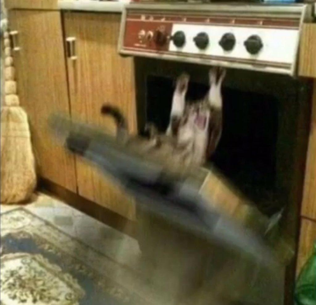 Kocúr v trúbe vs mačka vo vreci. ECEQy-7UYAA4E2M