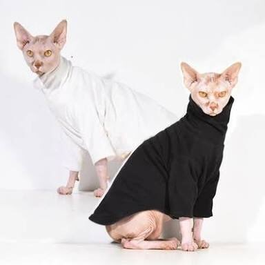 @joshgnosis @meadea I love them! You could dress it in a turtleneck.