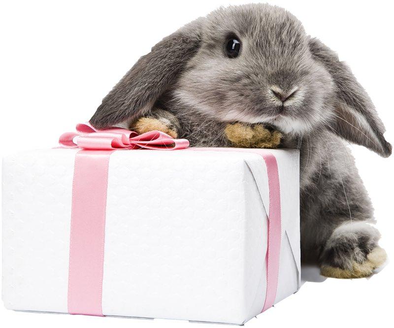 Поздравительная открытка кролика