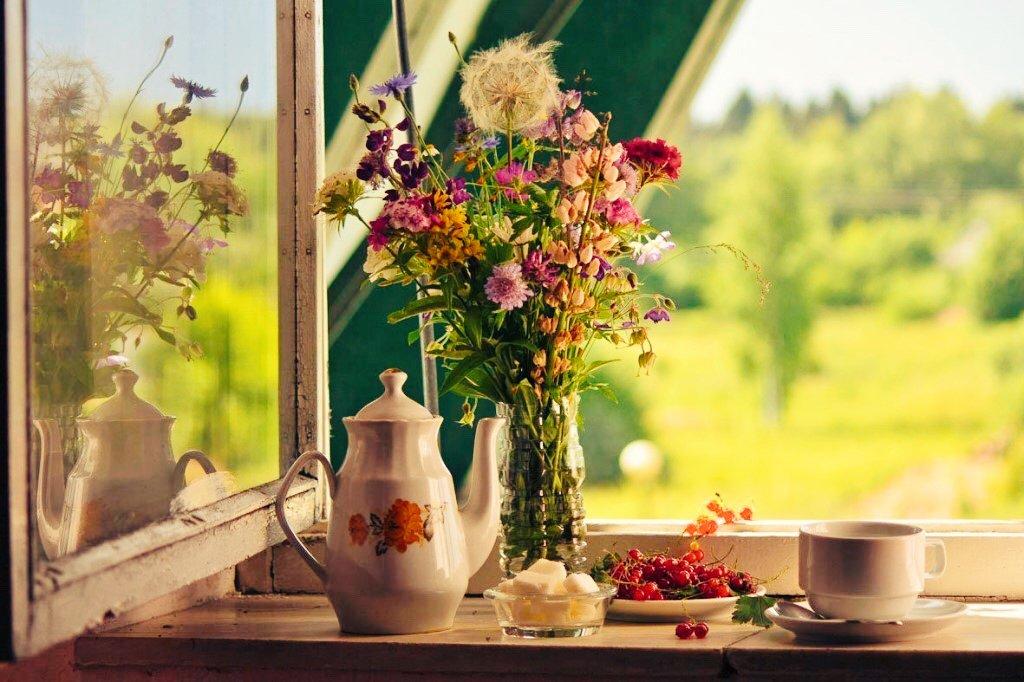 доброе утро на окне фото отличная мать самый