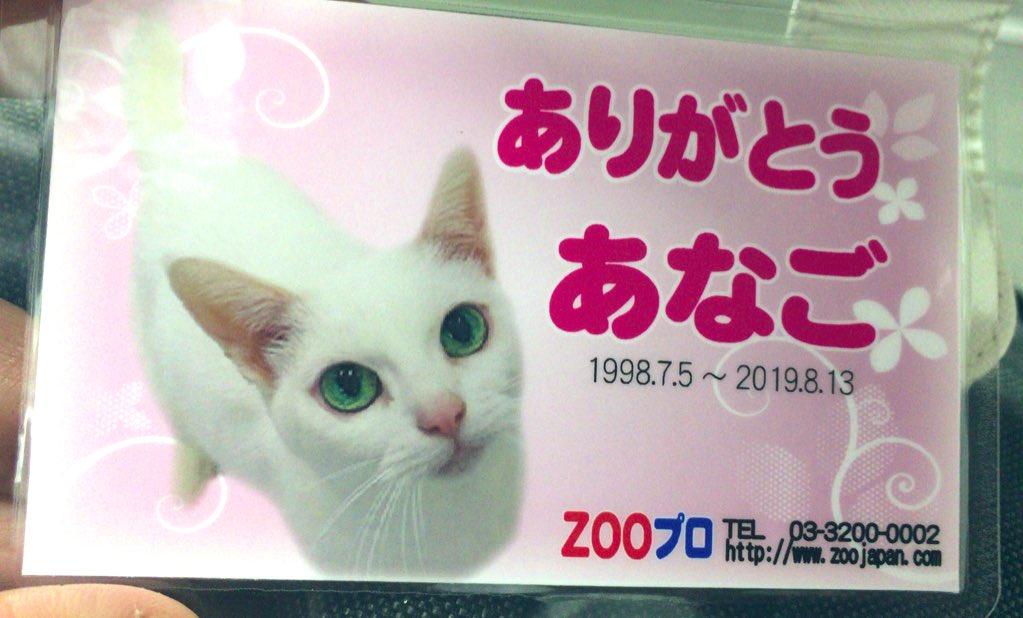 あなごちゃんのお別れ会に行って来ました渋谷駅から徒歩5分ですいつも優しく褒めてくれるトレーナー北村さんであなごちゃんも幸せだったと思います8/15(木)~18(日)10:00~18:00ZOOスタジオ(渋谷区南平台3-5 Jazoo渋谷302)