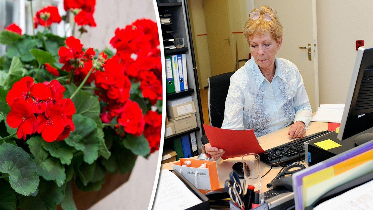 test Twitter Media - Weg met de geraniums: steeds meer Noord-Hollanders blijven werken na pensioen https://t.co/DCtXzZdogW https://t.co/spbY86Hqwd