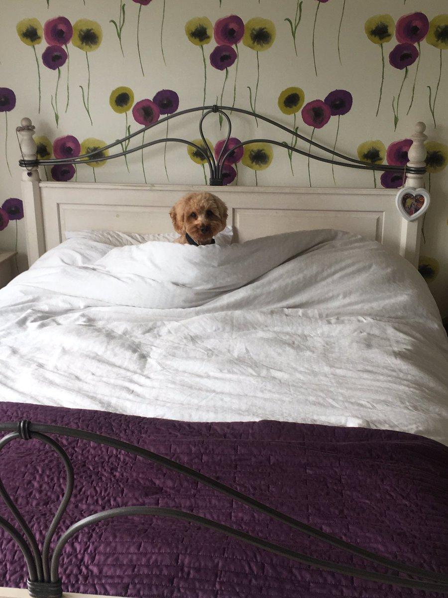 'I halping make da bed. I am good doggo'