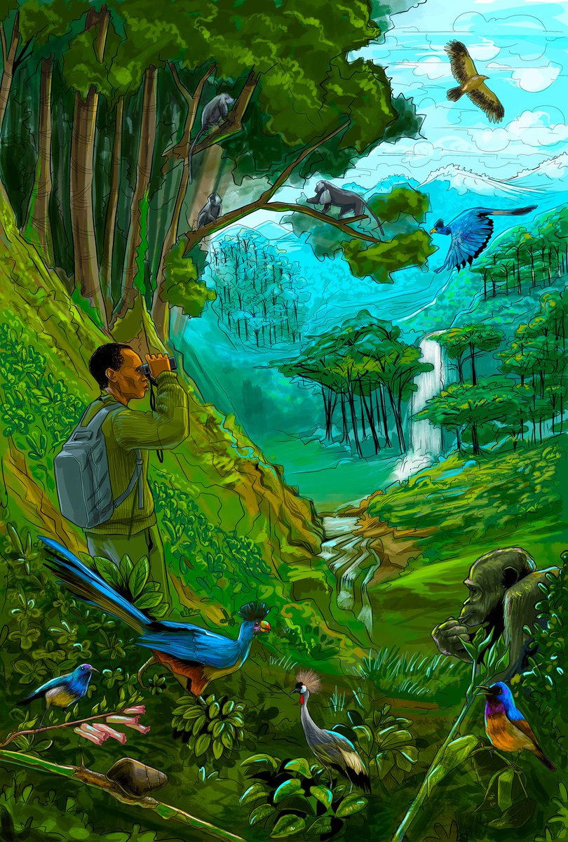 A few months ago I met two filmmakers in Nyungwe Forest, told them what I do, they proposed we draw the Cover for their film instead of using pictures, this is the result. #InkStainRw #RwOT #VisitRwanda<br>http://pic.twitter.com/Nu8fd9Vz3M