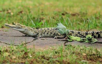 カエル「おっ、あの上冷たくて気持ち良さそうやんけw(シュバババ」