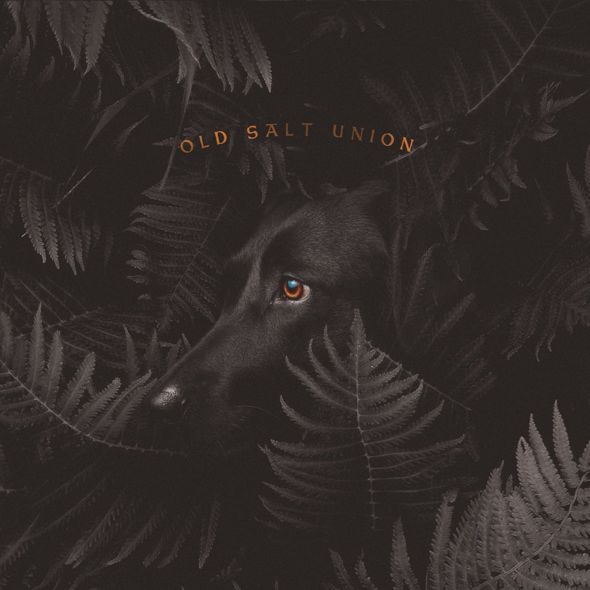 HAPPY RELEASE DAY!! We're so excited to bring this new music to y'all!! Were so proud of this record and so thankful for everyone who has supported us over the years to bring us to this moment. LISTEN: CompassRecords.lnk.to/wherethedogsdo…